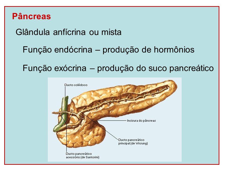 Pâncreas Glândula anfícrina ou mista. Função exócrina – produção do suco pancreático.
