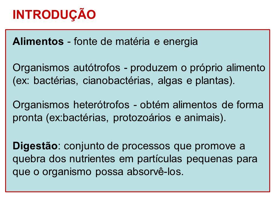 INTRODUÇÃO Alimentos - fonte de matéria e energia