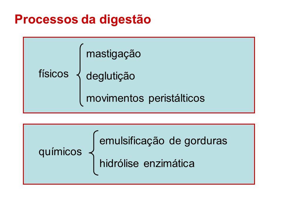 Processos da digestão mastigação físicos deglutição