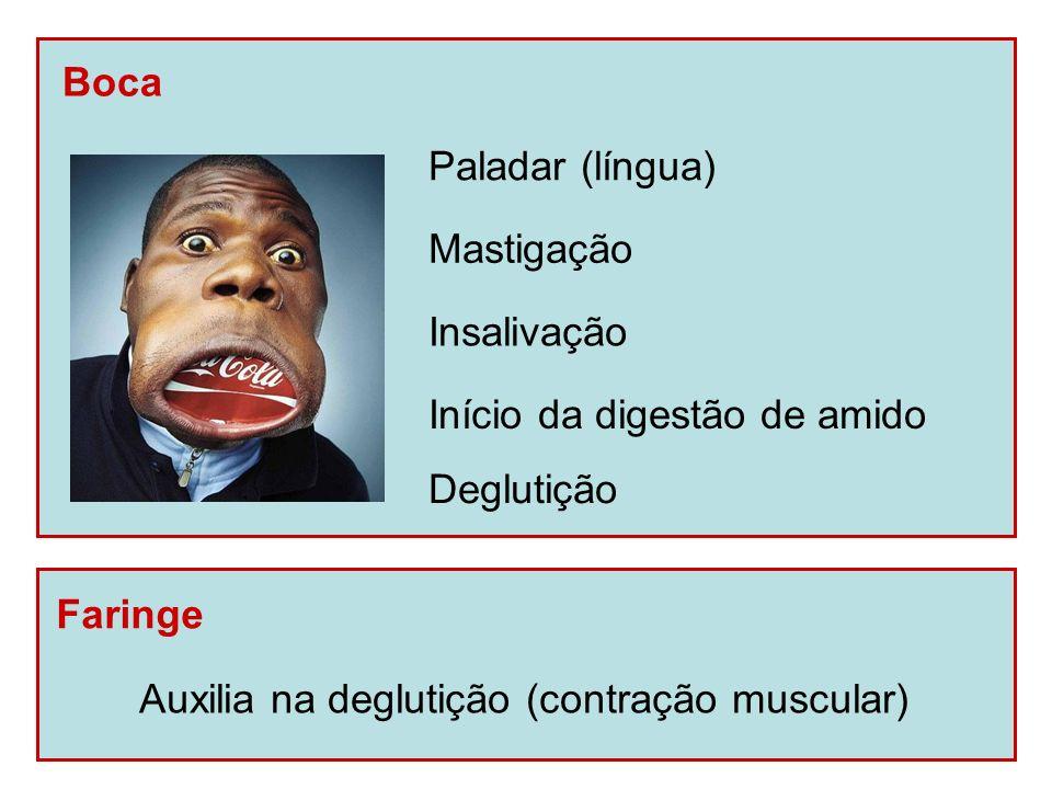 BocaPaladar (língua) Mastigação.Insalivação. Início da digestão de amido.