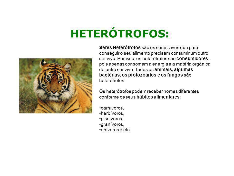 HETERÓTROFOS: