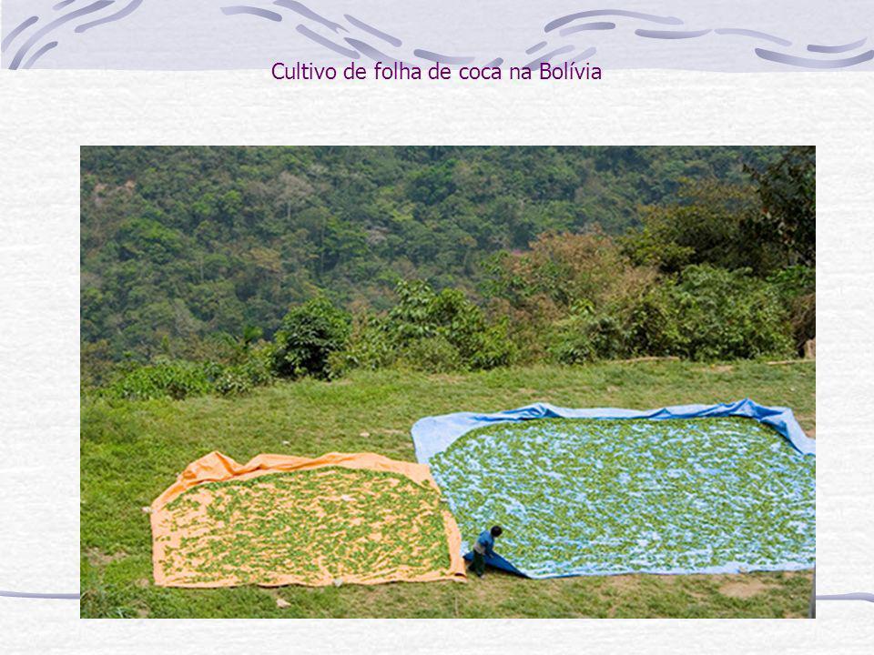 Cultivo de folha de coca na Bolívia