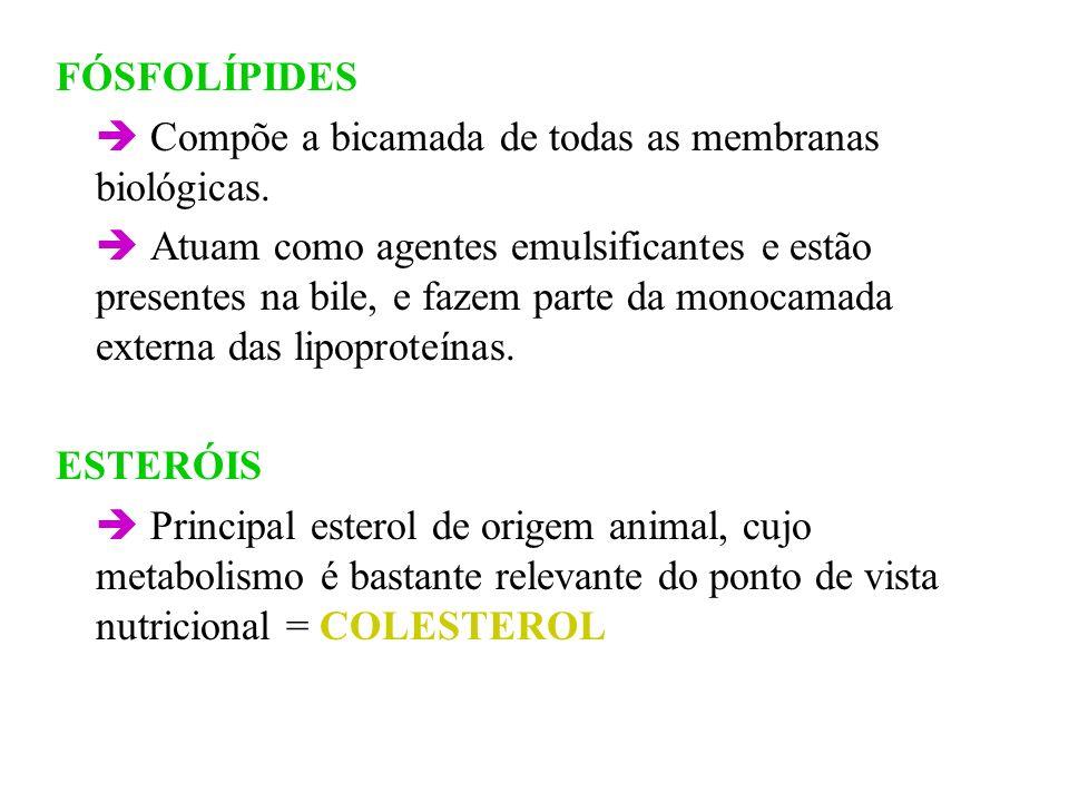 FÓSFOLÍPIDES  Compõe a bicamada de todas as membranas biológicas.
