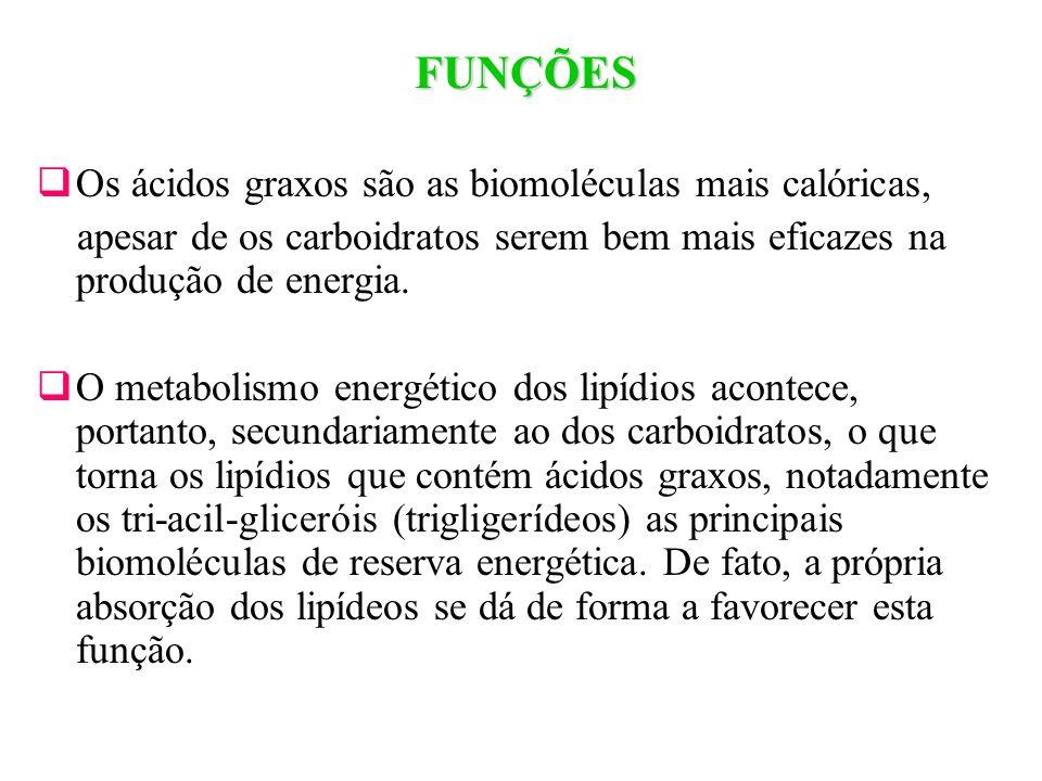 FUNÇÕES Os ácidos graxos são as biomoléculas mais calóricas,