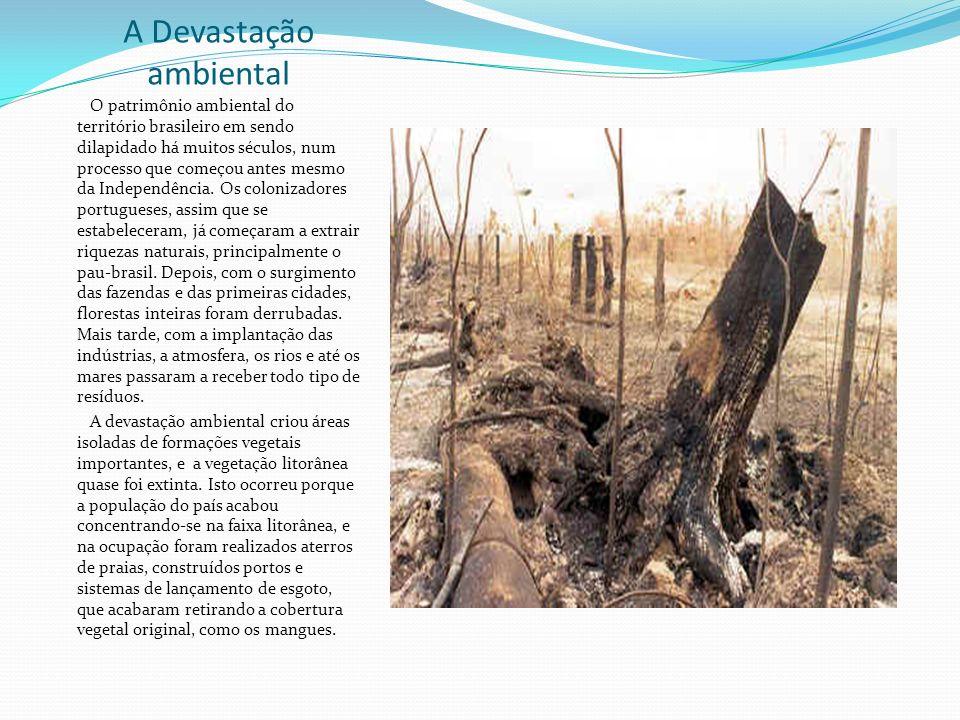 A Devastação ambiental