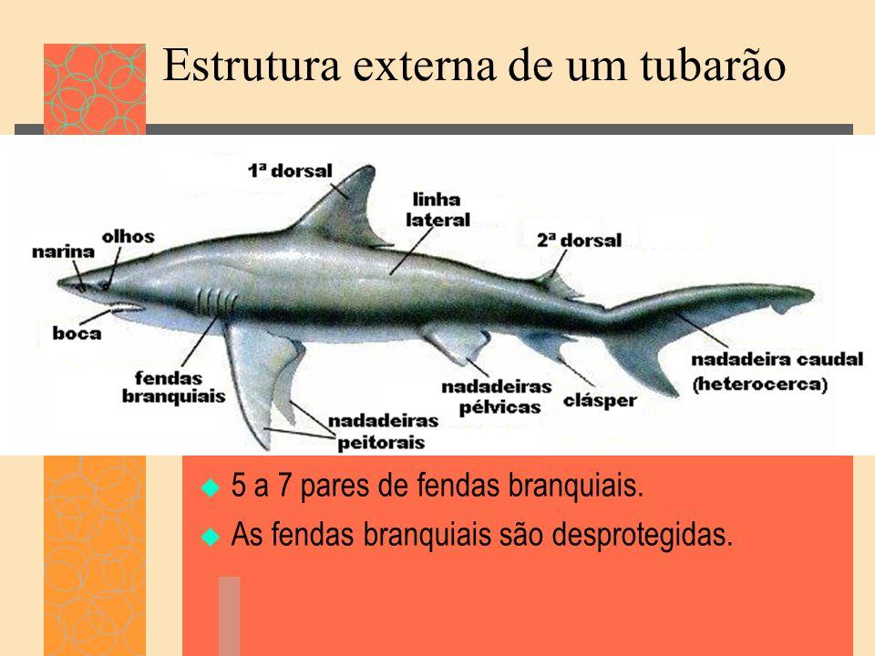 Estrutura externa de um tubarão