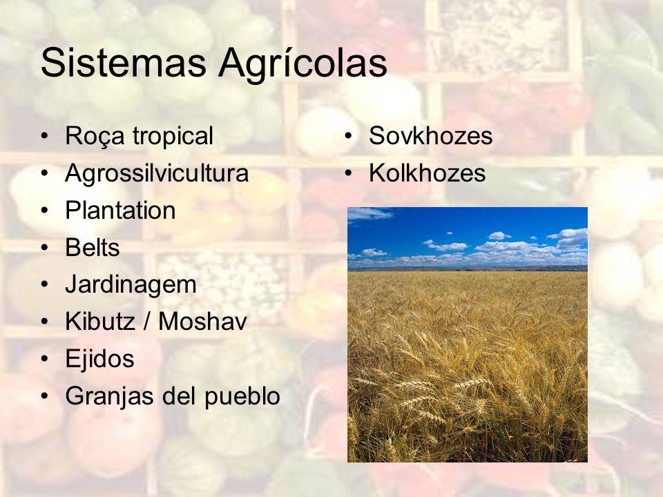 Sistemas Agrícolas Roça tropical Agrossilvicultura Plantation Belts