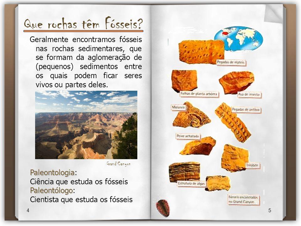 Que rochas têm Fósseis