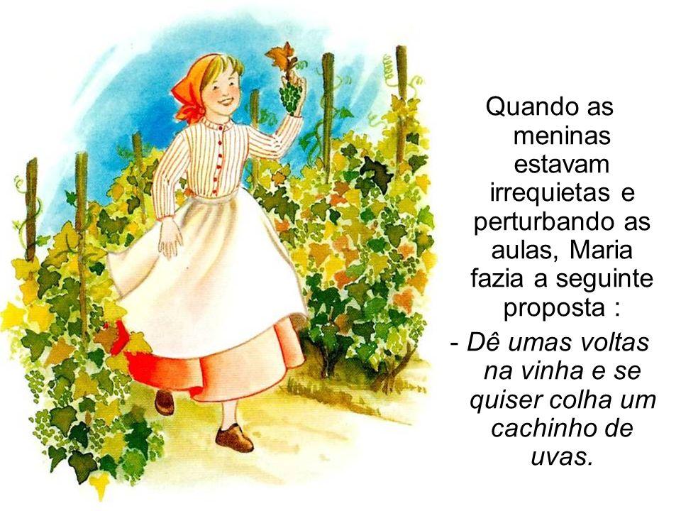 - Dê umas voltas na vinha e se quiser colha um cachinho de uvas.