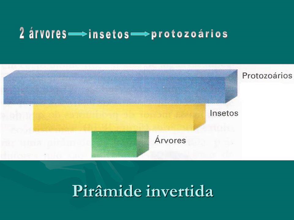 2 árvores insetos protozoários Pirâmide invertida