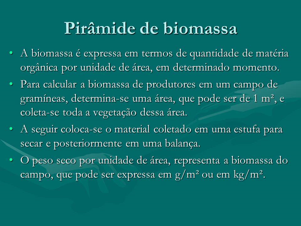 Pirâmide de biomassaA biomassa é expressa em termos de quantidade de matéria orgânica por unidade de área, em determinado momento.