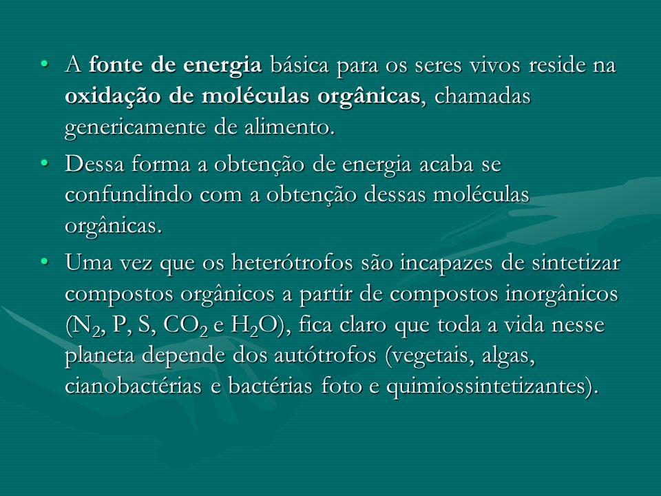 A fonte de energia básica para os seres vivos reside na oxidação de moléculas orgânicas, chamadas genericamente de alimento.