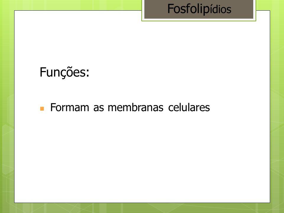 Fosfolipídios Funções: Formam as membranas celulares