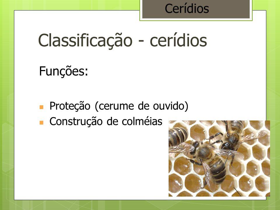 Classificação - cerídios