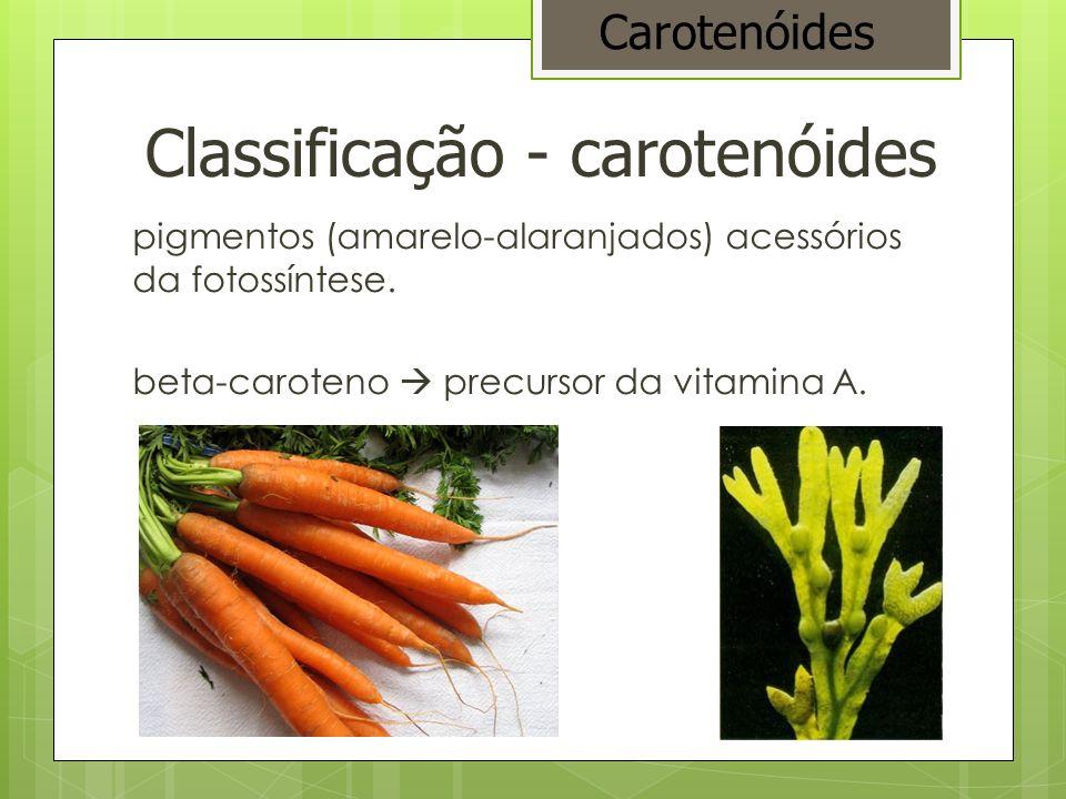 Classificação - carotenóides