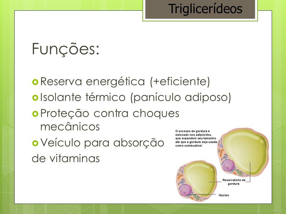 Funções: Triglicerídeos Reserva energética (+eficiente)