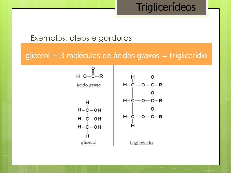 glicerol + 3 moléculas de ácidos graxos = triglicerídio