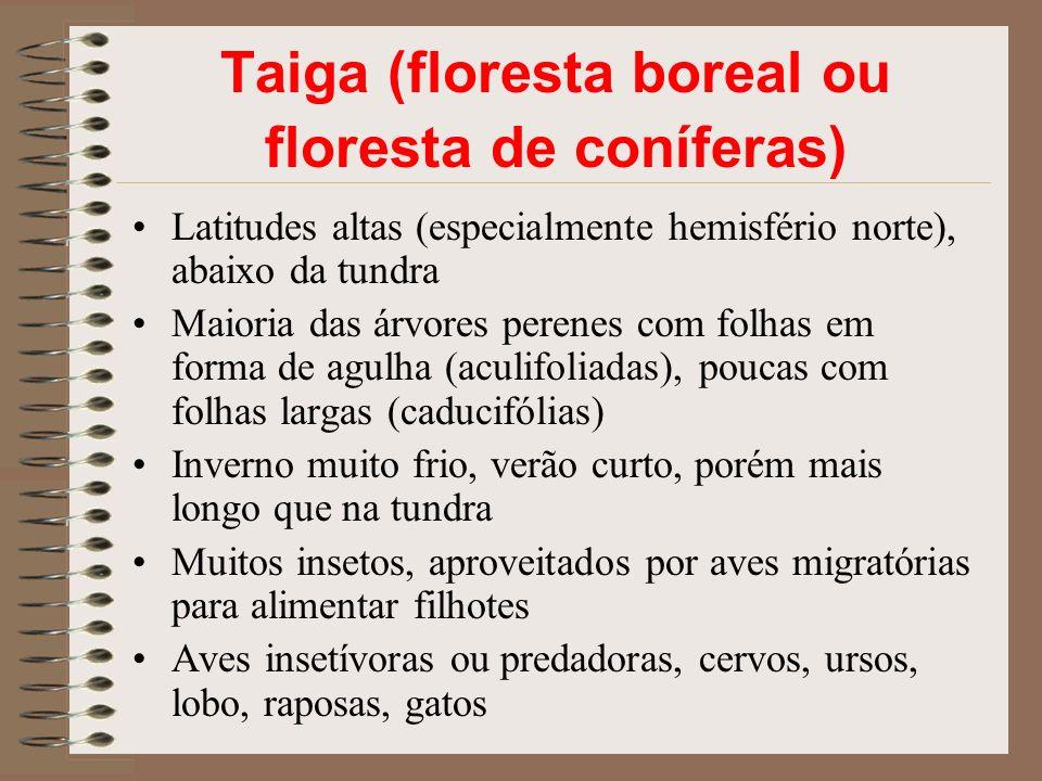 Taiga (floresta boreal ou floresta de coníferas)