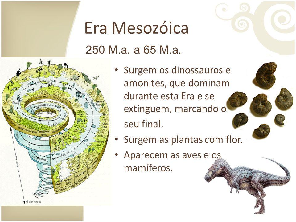 Era Mesozóica 250 M.a. a 65 M.a. Surgem os dinossauros e amonites, que dominam durante esta Era e se extinguem, marcando o.