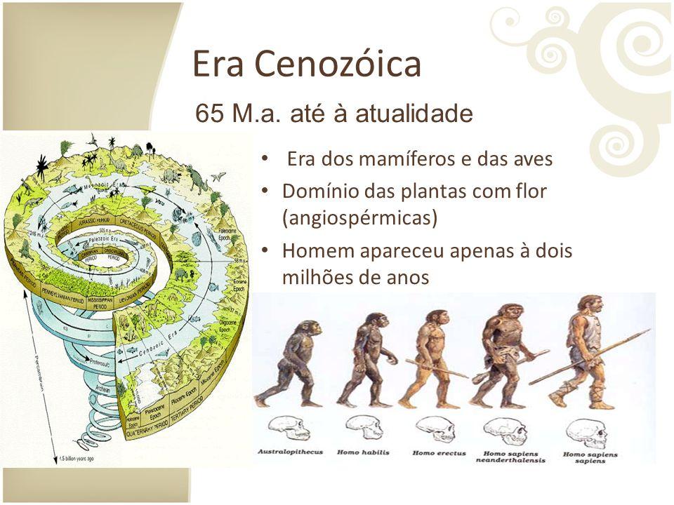 Era Cenozóica 65 M.a. até à atualidade Era dos mamíferos e das aves