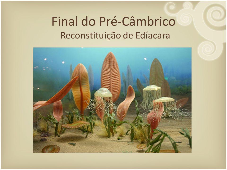 Final do Pré-Câmbrico Reconstituição de Edíacara