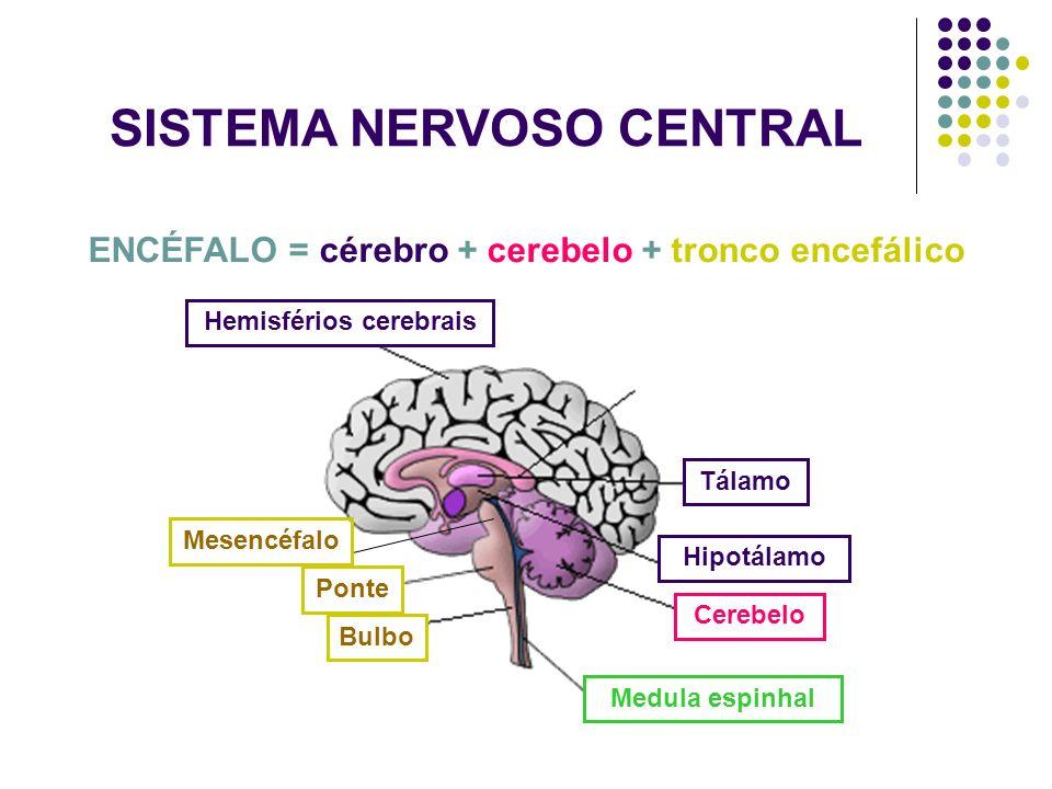 SISTEMA NERVOSO CENTRAL Hemisférios cerebrais