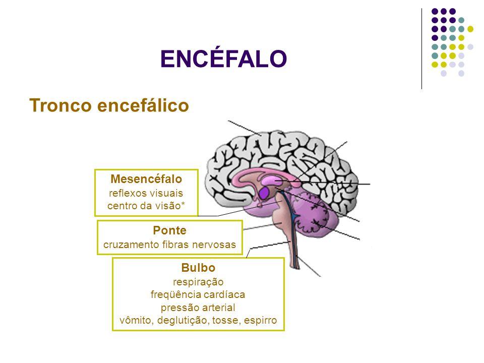 ENCÉFALO Tronco encefálico