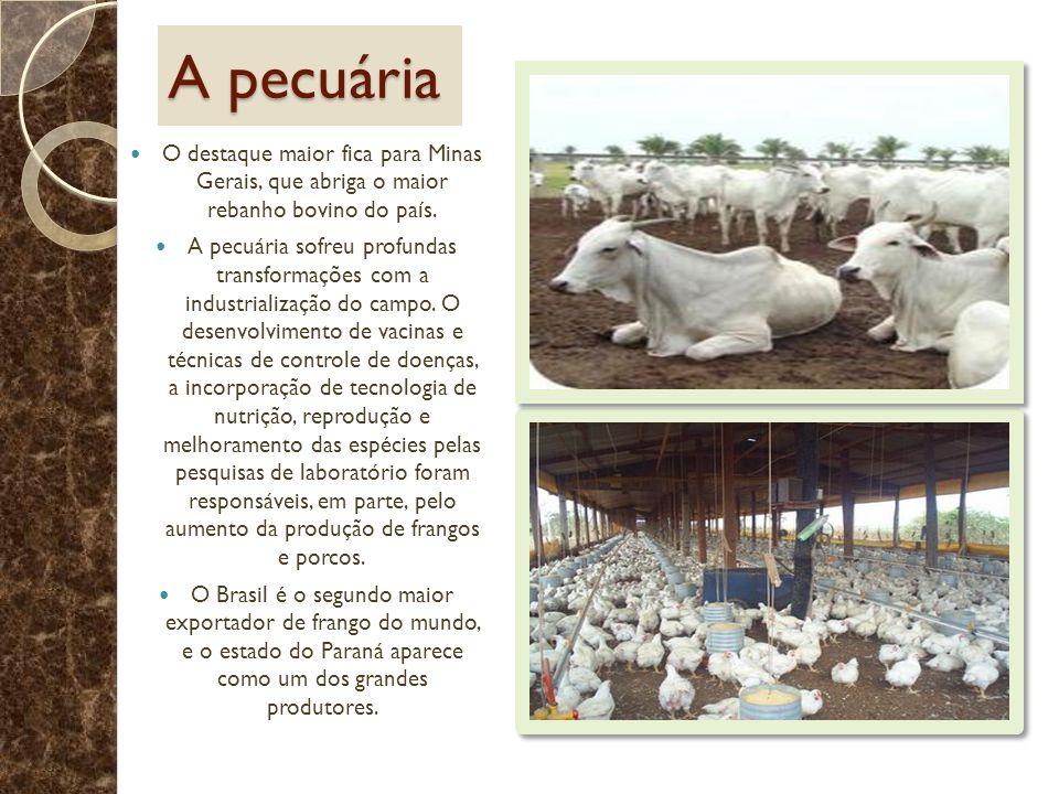 A pecuária O destaque maior fica para Minas Gerais, que abriga o maior rebanho bovino do país.