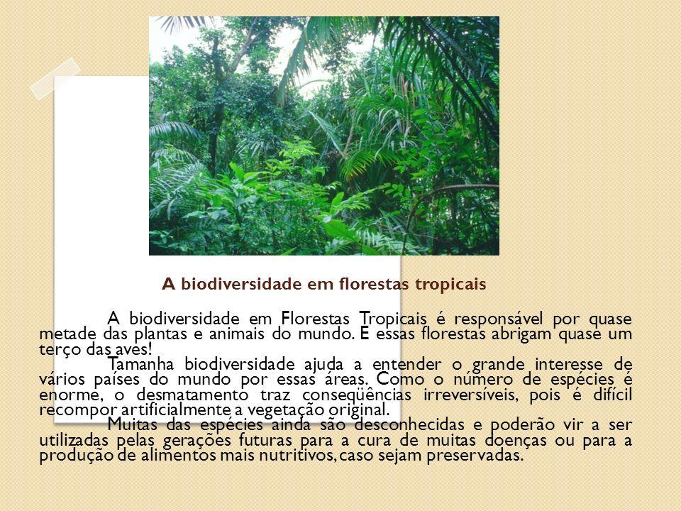 A biodiversidade em florestas tropicais
