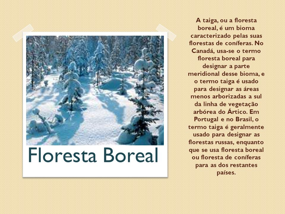 A taiga, ou a floresta boreal, é um bioma caracterizado pelas suas florestas de coníferas. No Canadá, usa-se o termo floresta boreal para designar a parte meridional desse bioma, e o termo taiga é usado para designar as áreas menos arborizadas a sul da linha de vegetação arbórea do Ártico. Em Portugal e no Brasil, o termo taiga é geralmente usado para designar as florestas russas, enquanto que se usa floresta boreal ou floresta de coníferas para as dos restantes países.