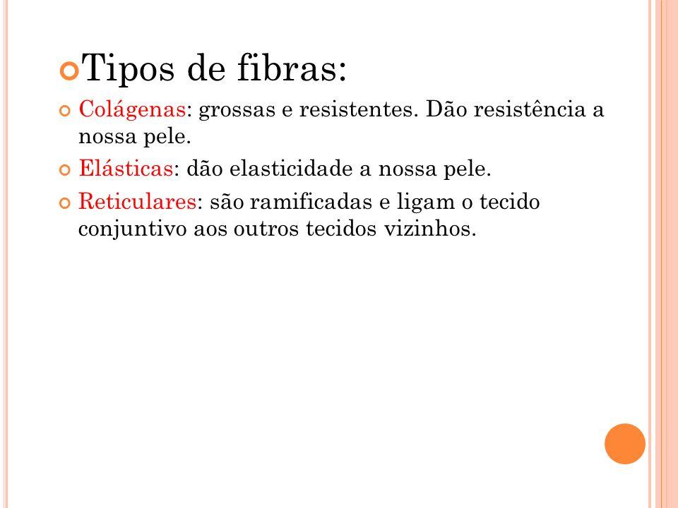 Tipos de fibras: Colágenas: grossas e resistentes. Dão resistência a nossa pele. Elásticas: dão elasticidade a nossa pele.