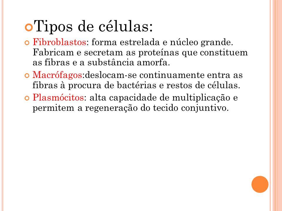 Tipos de células: Fibroblastos: forma estrelada e núcleo grande. Fabricam e secretam as proteínas que constituem as fibras e a substância amorfa.