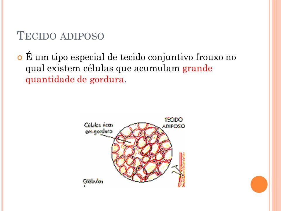 Tecido adiposo É um tipo especial de tecido conjuntivo frouxo no qual existem células que acumulam grande quantidade de gordura.