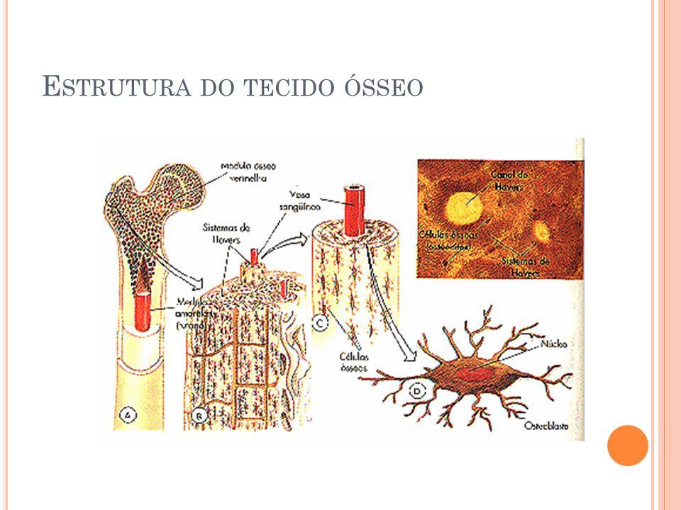 Estrutura do tecido ósseo