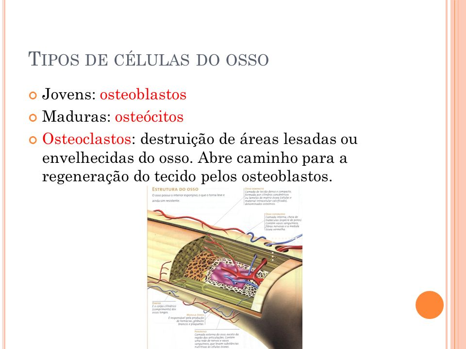 Tipos de células do osso