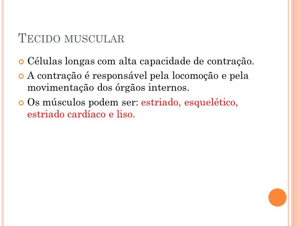 Tecido muscular Células longas com alta capacidade de contração.