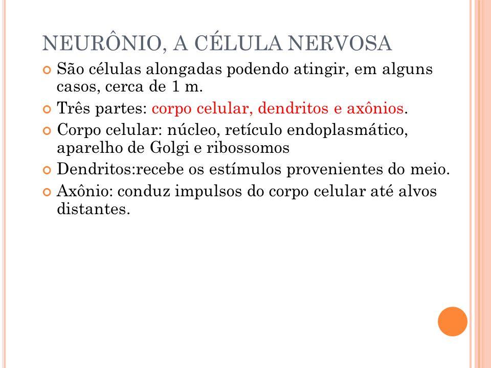 NEURÔNIO, A CÉLULA NERVOSA