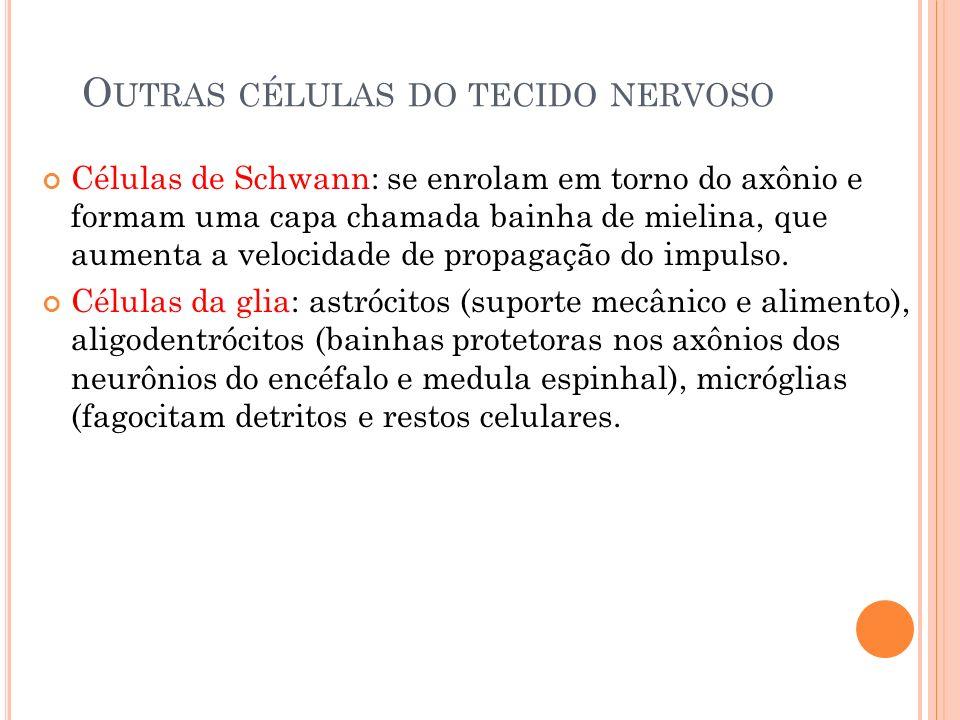 Outras células do tecido nervoso