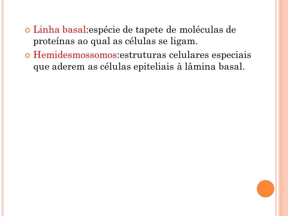 Linha basal:espécie de tapete de moléculas de proteínas ao qual as células se ligam.