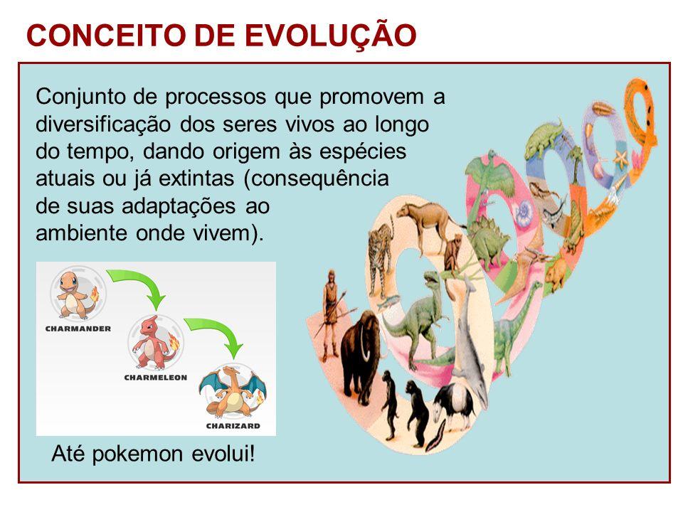 CONCEITO DE EVOLUÇÃO Conjunto de processos que promovem a