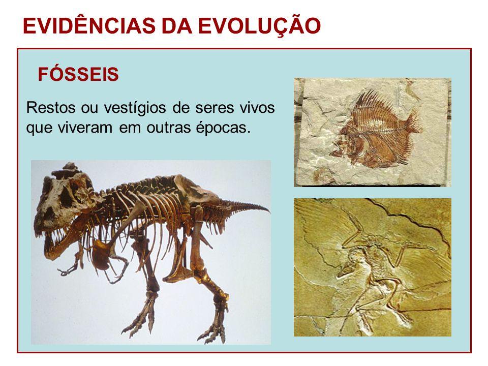 EVIDÊNCIAS DA EVOLUÇÃO