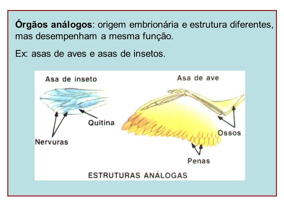 Órgãos análogos: origem embrionária e estrutura diferentes,