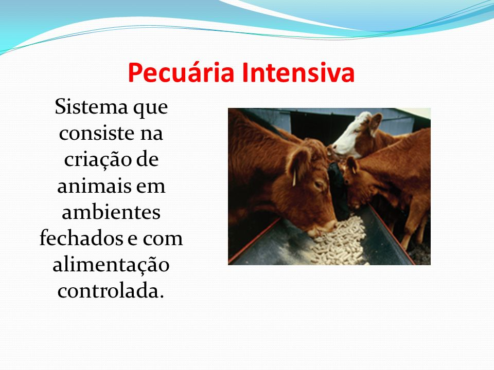 Pecuária Intensiva Sistema que consiste na criação de animais em ambientes fechados e com alimentação controlada.