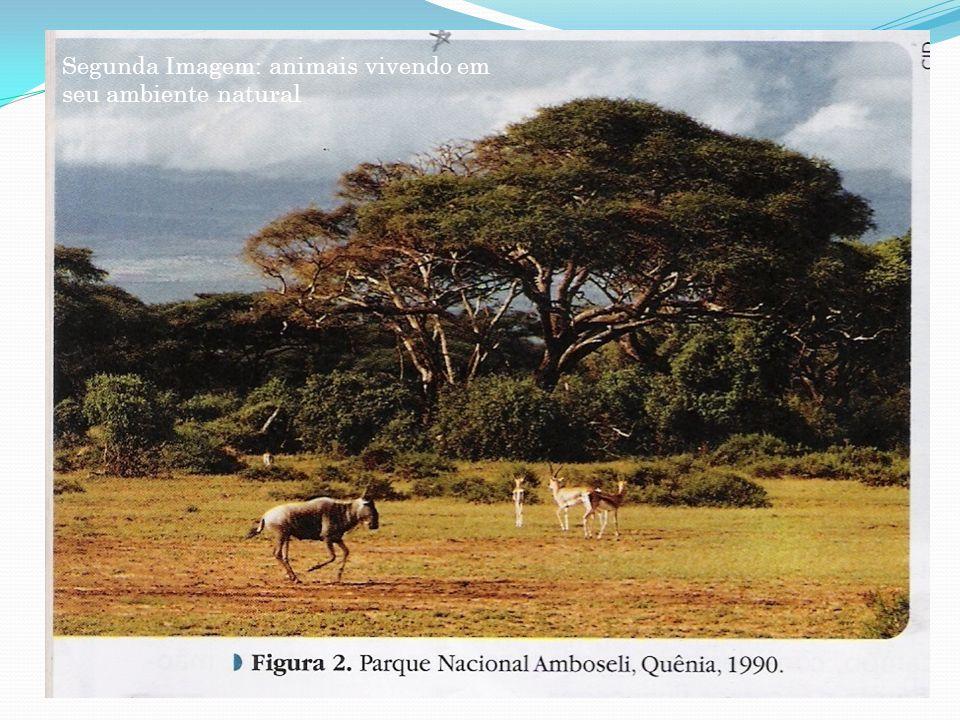 Segunda Imagem: animais vivendo em seu ambiente natural