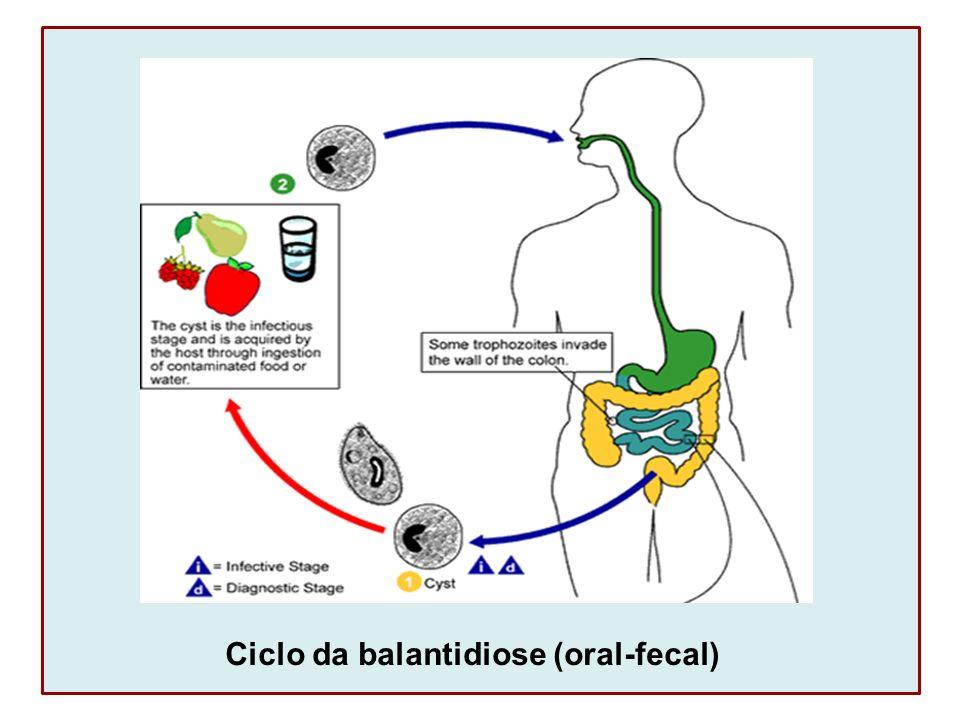 Ciclo da balantidiose (oral-fecal)