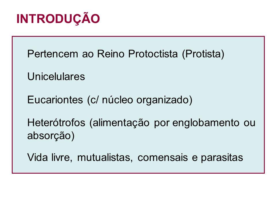 INTRODUÇÃO Pertencem ao Reino Protoctista (Protista) Unicelulares