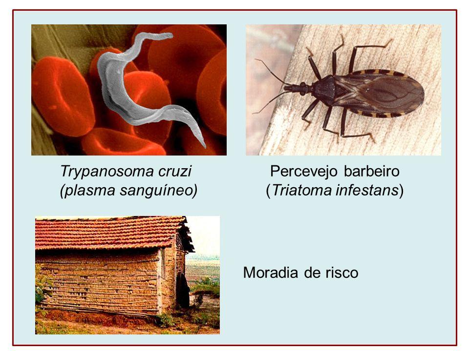 Trypanosoma cruzi (plasma sanguíneo) Percevejo barbeiro (Triatoma infestans) Moradia de risco