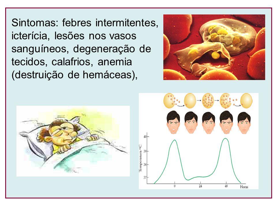 Sintomas: febres intermitentes,