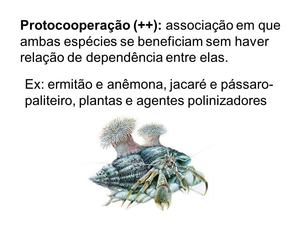 Protocooperação (++): associação em que