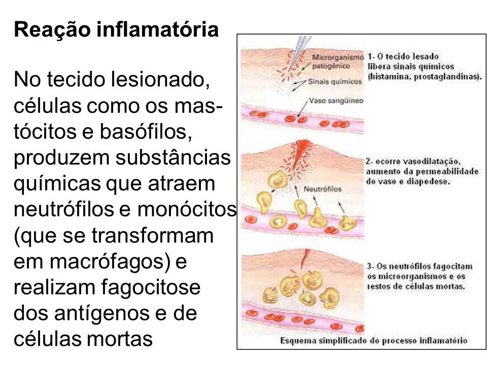 Reação inflamatória No tecido lesionado, células como os mas- tócitos e basófilos, produzem substâncias.